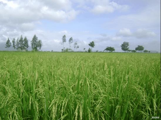 Những điều cần biết thêm Đất nông nghiệp là gì