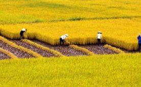 Đất nông nghiệp là gì ???