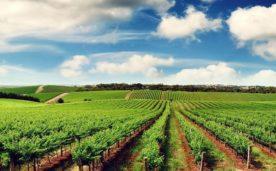 Kinh nghiệm mua bán đất trang trại – Những quy định Pháp lý