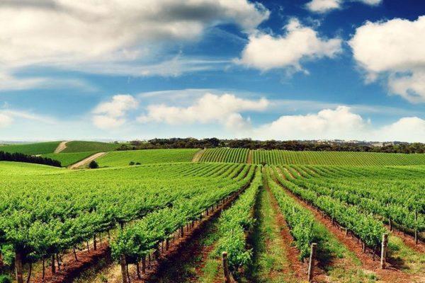 mua bán đất trang trại đang trở thành xu hướng đầu tư mới