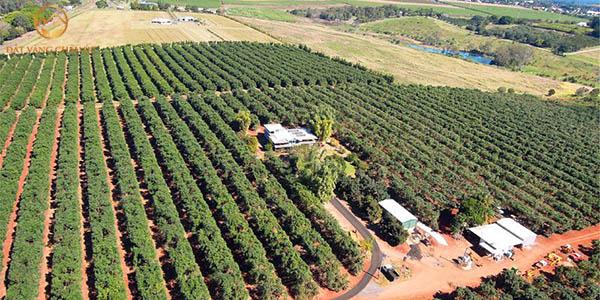 Tư vấn đầu tư mua bán đất trang trại chuyên sâu